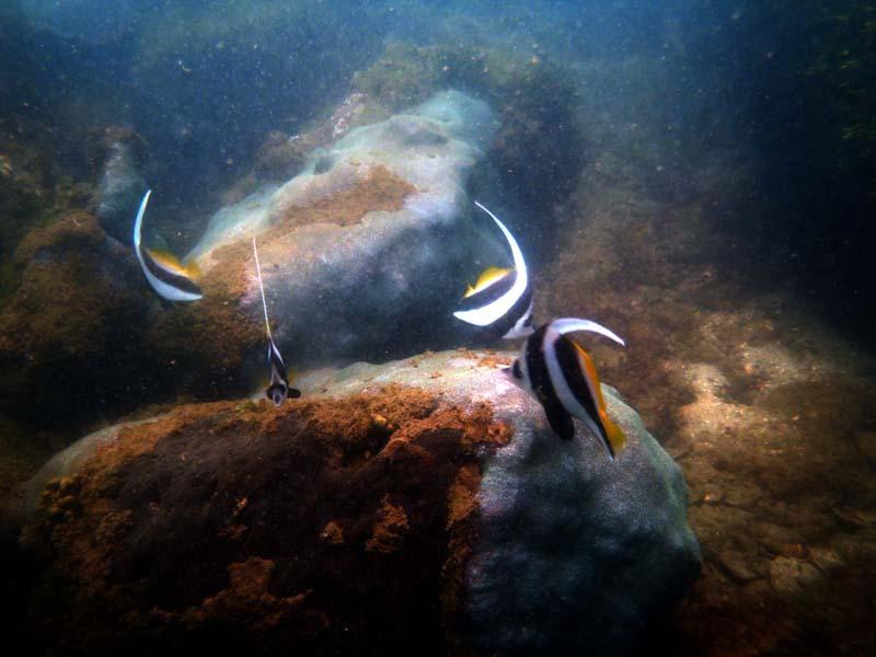 morya Scubadiving