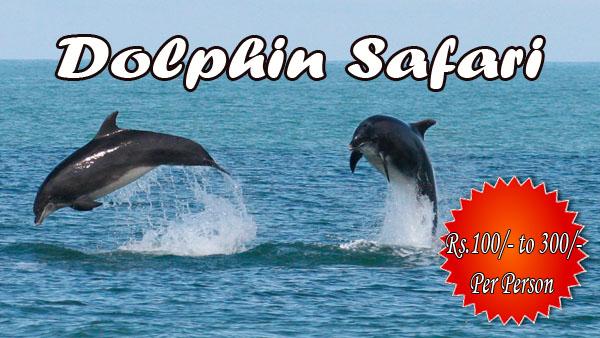 Dolphin Safari copy